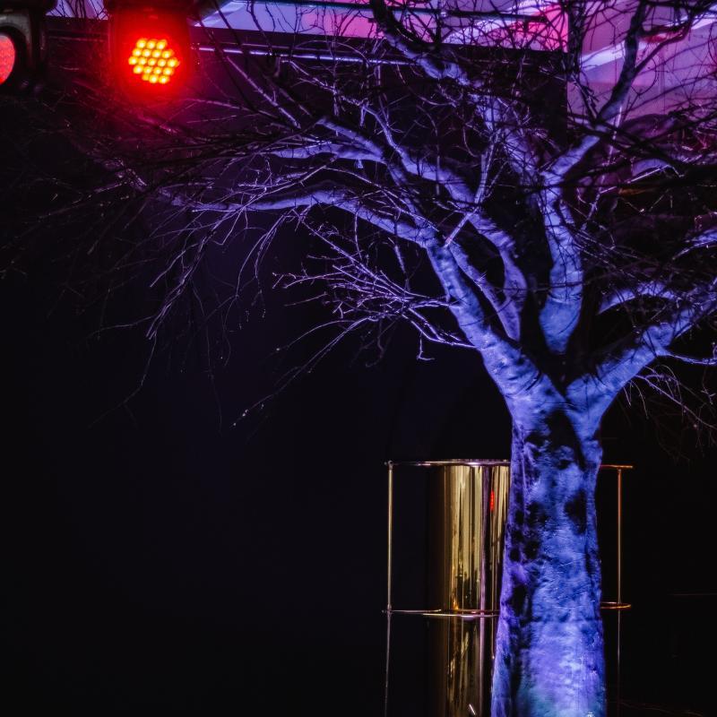 Дерево черное большое