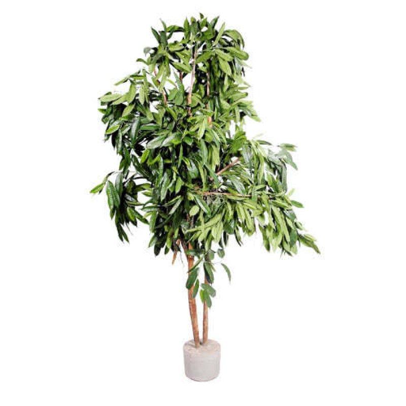 Дерево зеленое большое