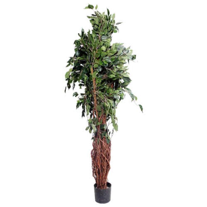 Дерево зеленое малое